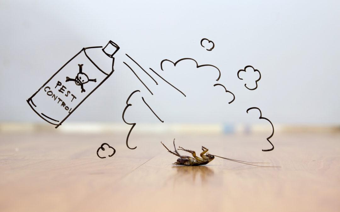 Come si risolve l'invasione di blatte e scarafaggi