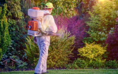 L'importanza della disinfestazione zanzare