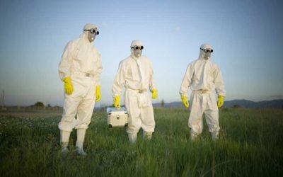 Professionisti nella disinfestazione vespe